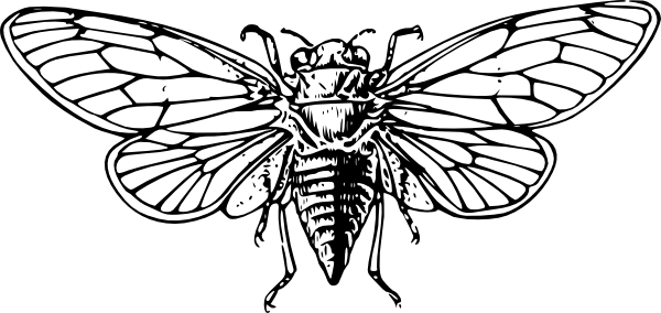 Cicada Clip Art at Clker.com.