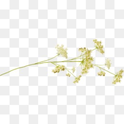 Download Free png Small Flowers PNG Images.