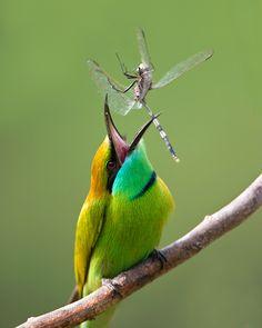 Green Bee.