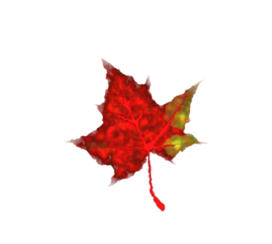 Small Fall Leaves Clipart.