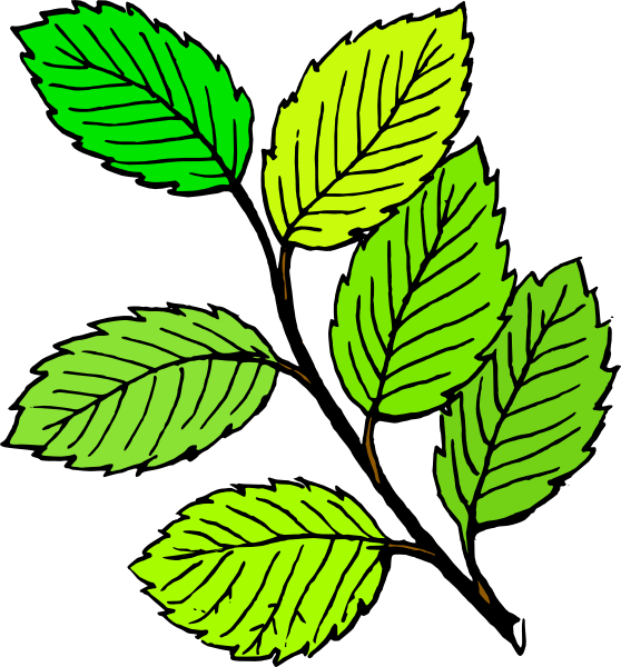 Small Tree With Leaves Clipart.