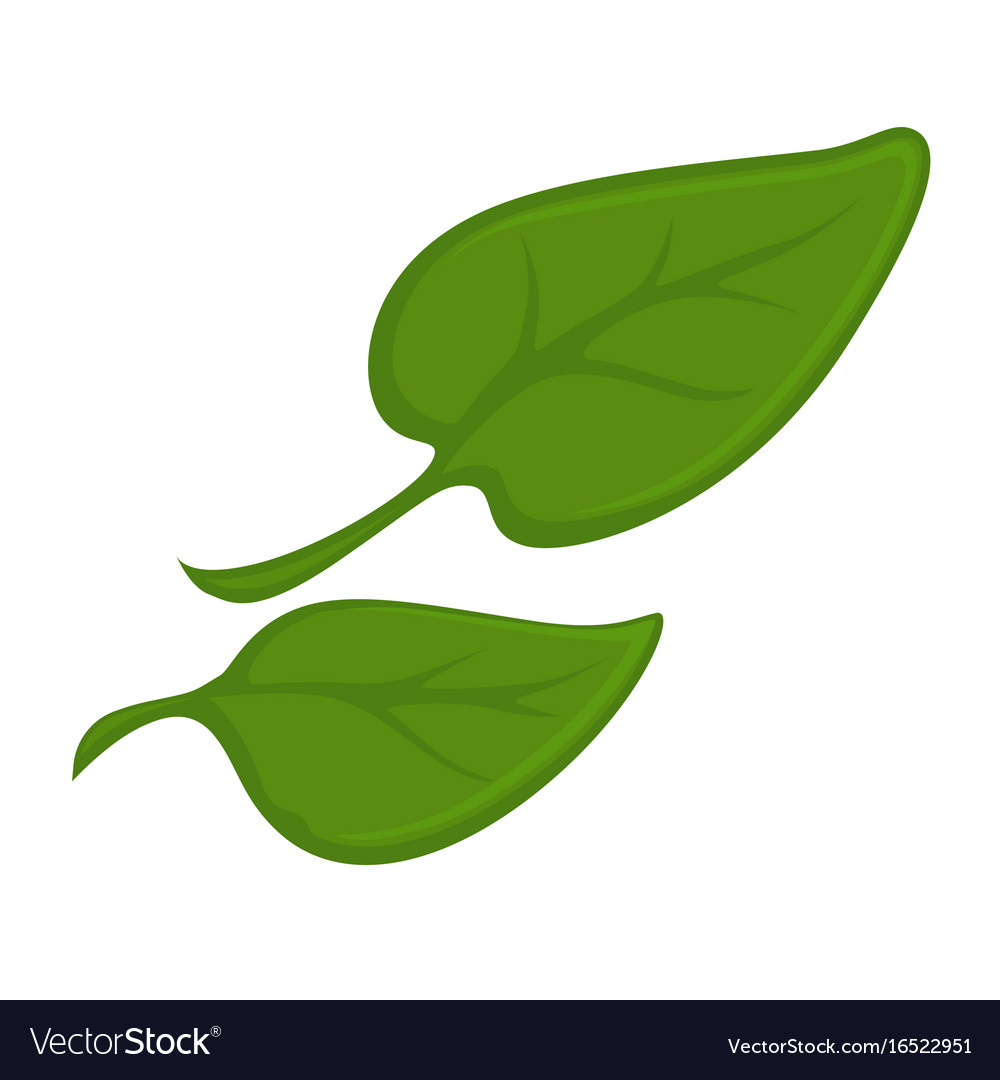 Two green small leaves vector image.