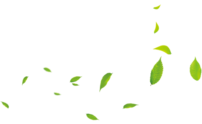 Download Free png Small Leaves Green Cartoon Download Free.