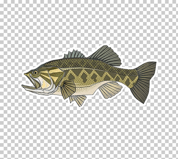 Largemouth bass Smallmouth bass Bass fishing, Fishing PNG.