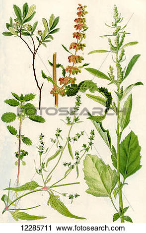 Small nettle clipart - Clipground