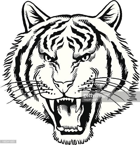 Tigers Head Vector Art.