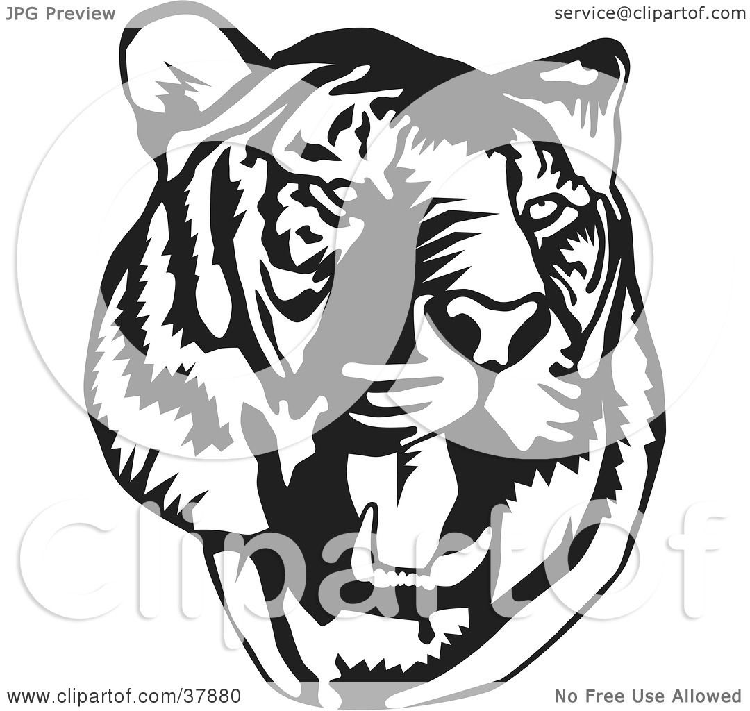 Clipart Illustration of a Black And White Roaring Tiger Head by.