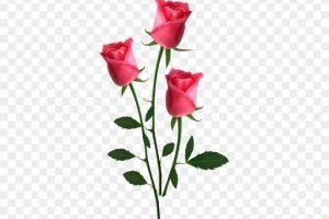 Small rose clipart 2 » Clipart Portal.