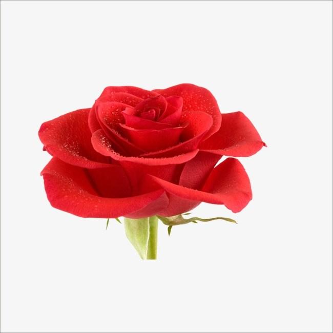 Small rose clipart 1 » Clipart Portal.