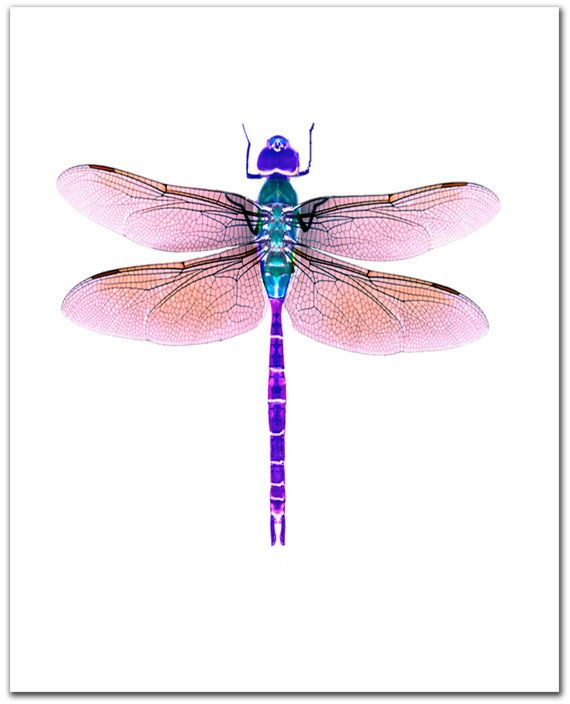 1000+ ideas about Dragonfly Images on Pinterest.
