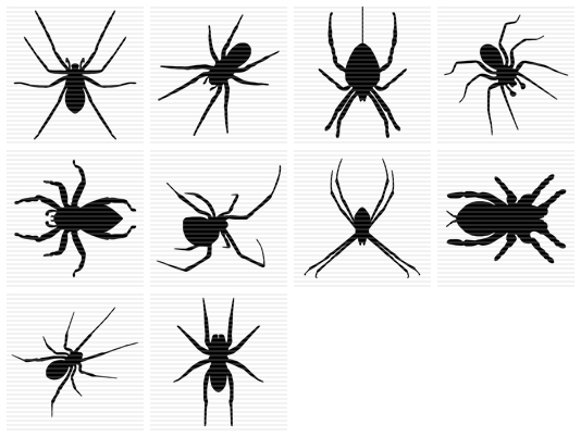 Small spider clipart.