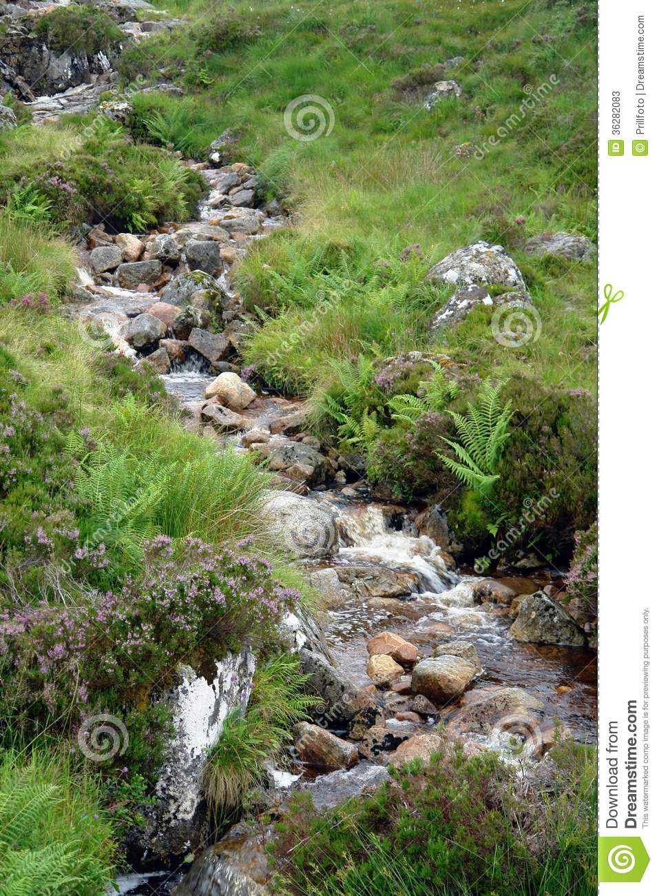 Small Stream With Pebbles Stock Photos.