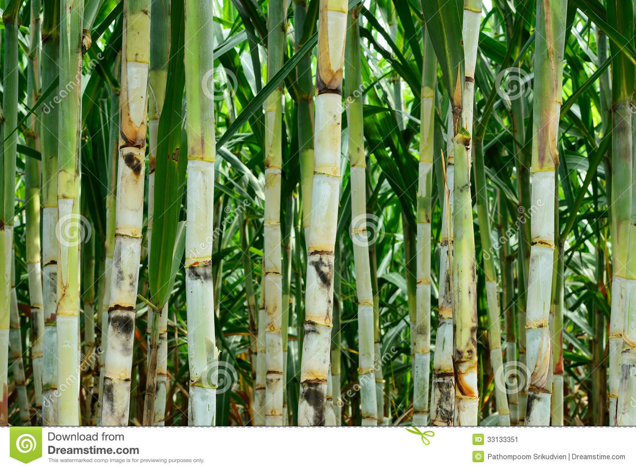 Sugar cane farm clipart.