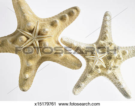 Stock Photography of Small Sugar Star on top of Thorny Star.