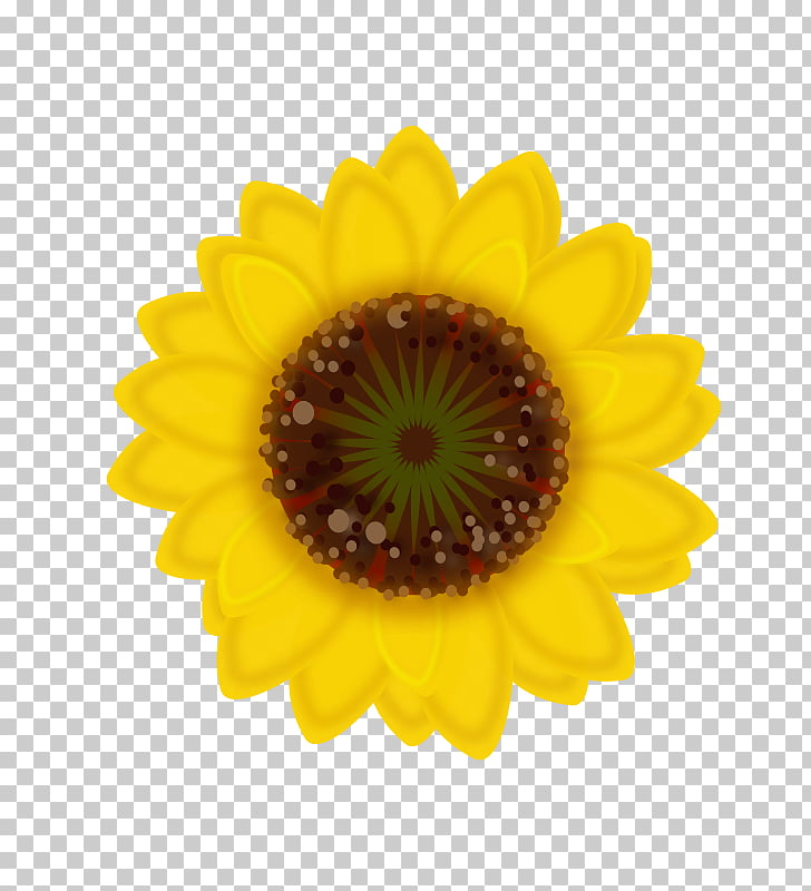 Common sunflower Sunflower seed Sticker Transvaal daisy.