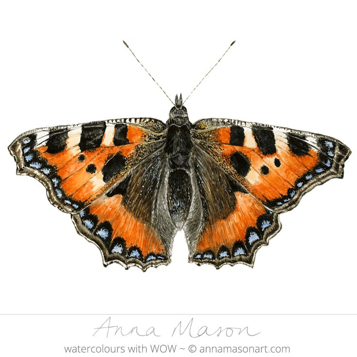 1000+ images about Butterflies. on Pinterest.