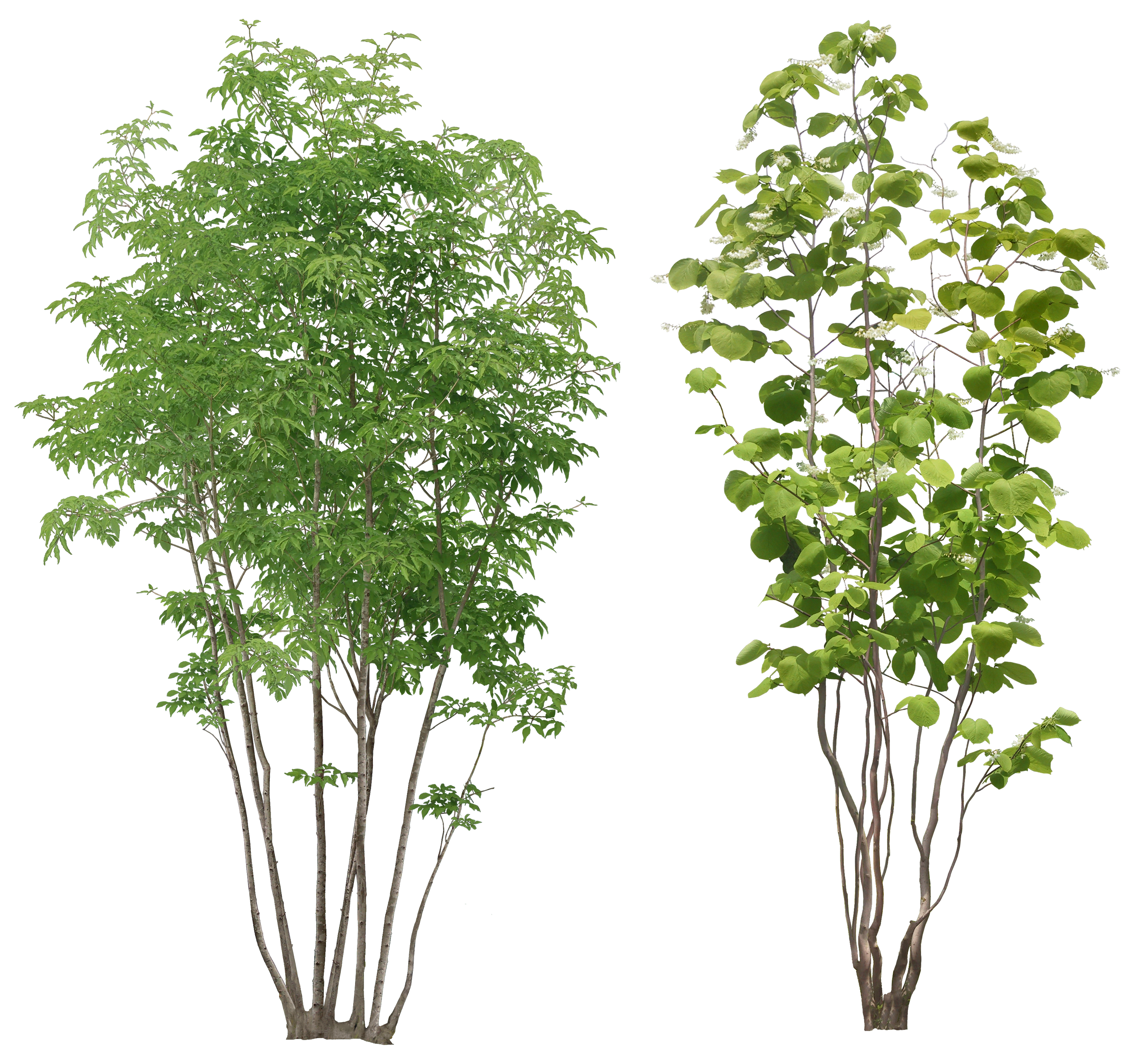 Tree PNG Transparent Tree.PNG Images..