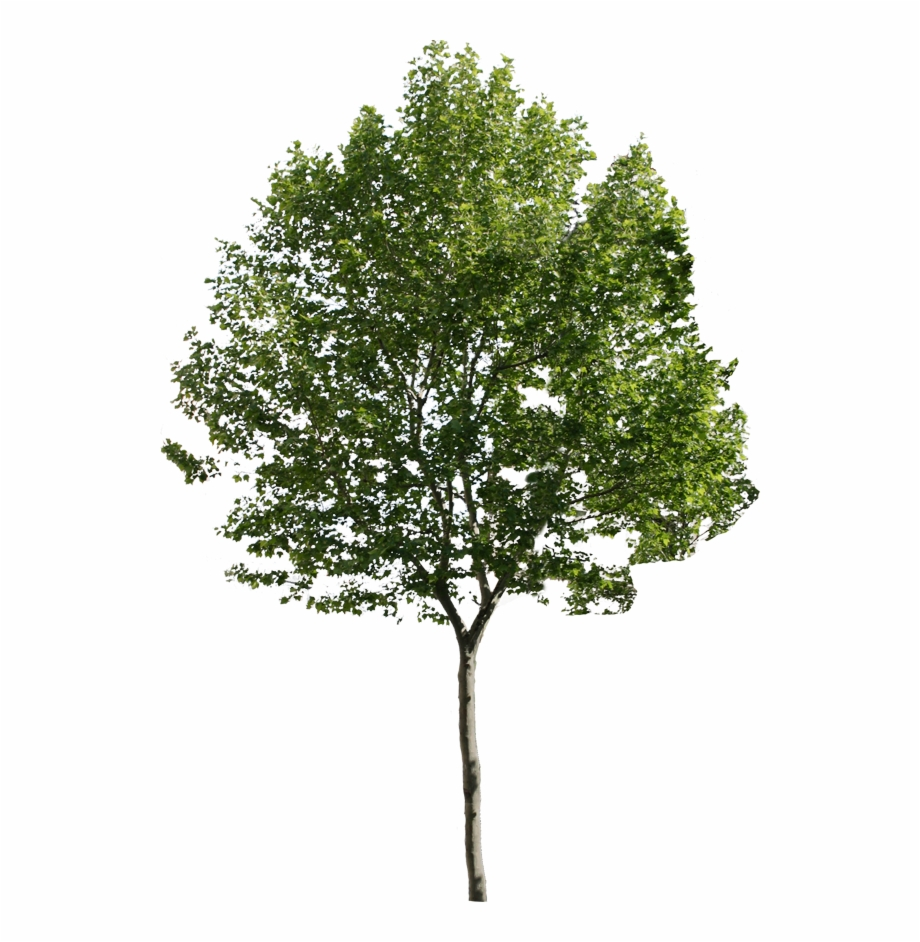 Small Tree Png.