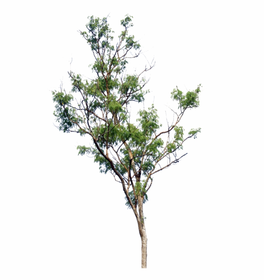 Little Tree Png.
