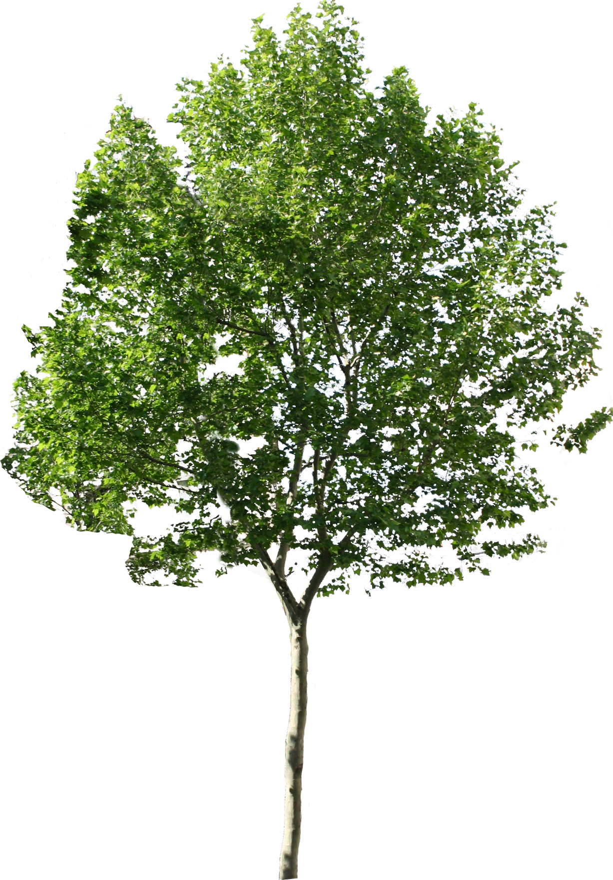 Tree PNG images.