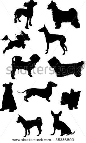 10 Best ideas about Types Of Small Dogs on Pinterest.