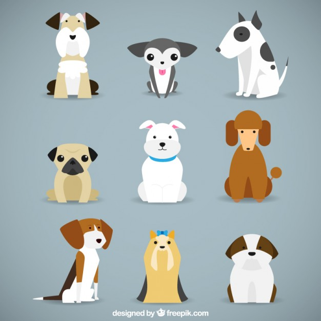 Dog breeds collection Vector.