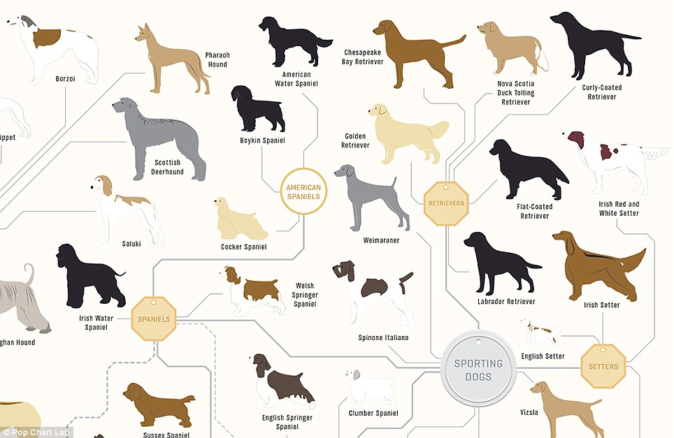 The family tree of DOGS: Infographic reveals how every breed is.
