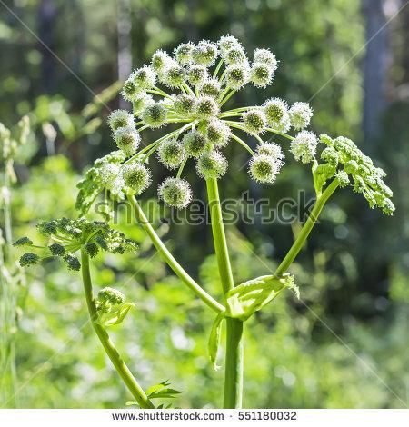 Plant Species Stock Photos, Royalty.