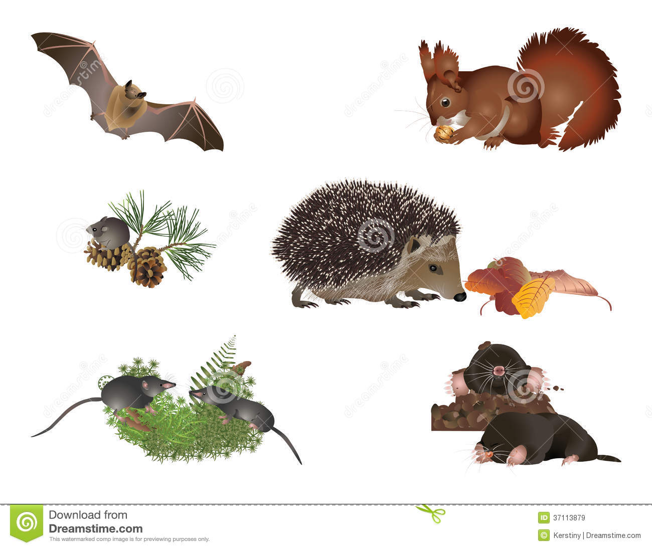 Small Mammals Royalty Free Stock Images.