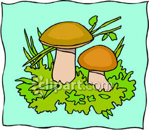 Small_Brown_Wild_Mushrooms_Royalty_Free_Clipart_Picture_081221.