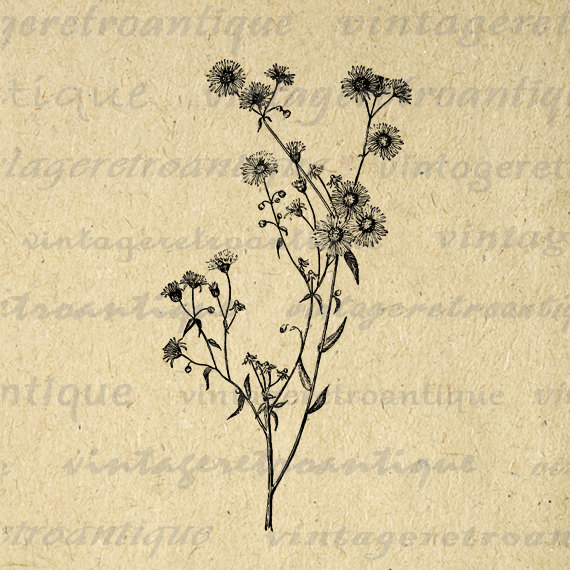 Printable Image Wild Daisy Flower Graphic Wildflower Digital.