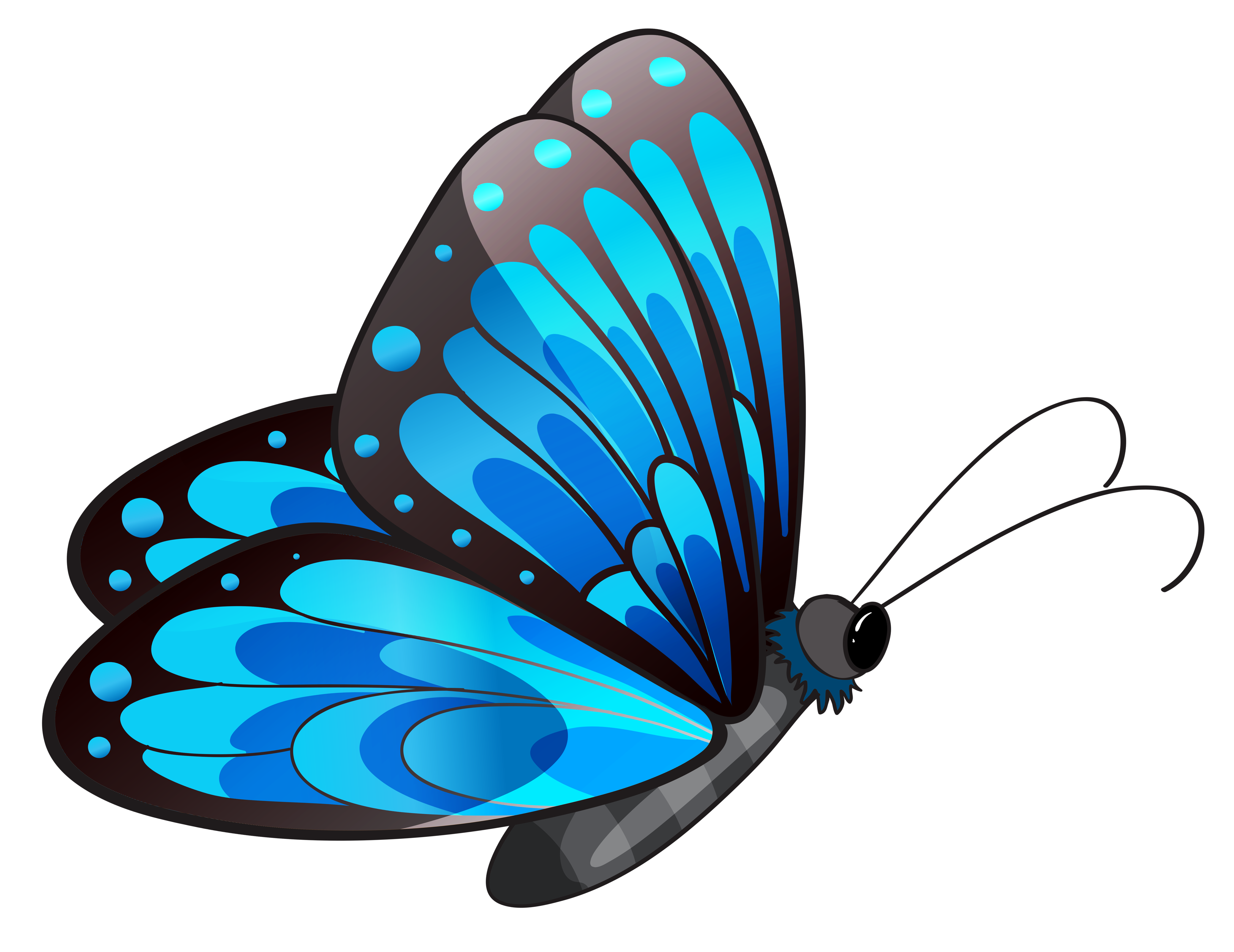 Transparent Blue Butterfly PNG Clipart.