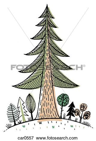 Stock Illustration of A large redwood tree towering over smaller.