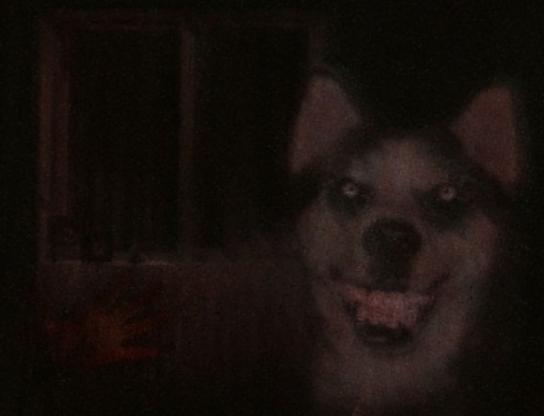 Smile Dog.