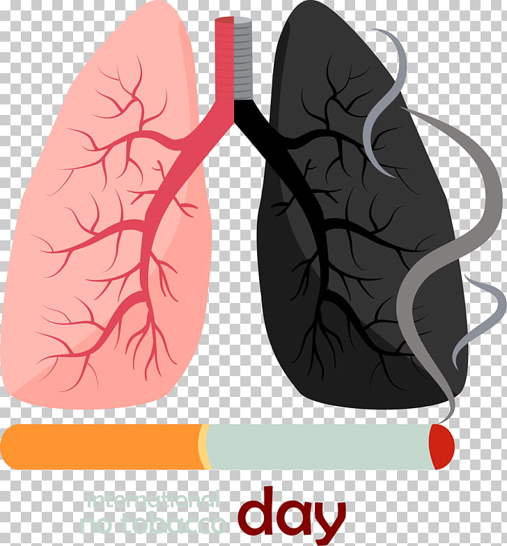 117 smoke Lung PNG cliparts for free download.