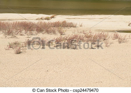 Picture of sandy shore of the Nakdong River with plant in Andong.