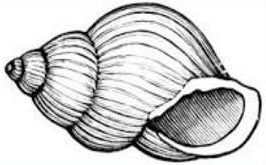 Clipart of a snail in a shell house.