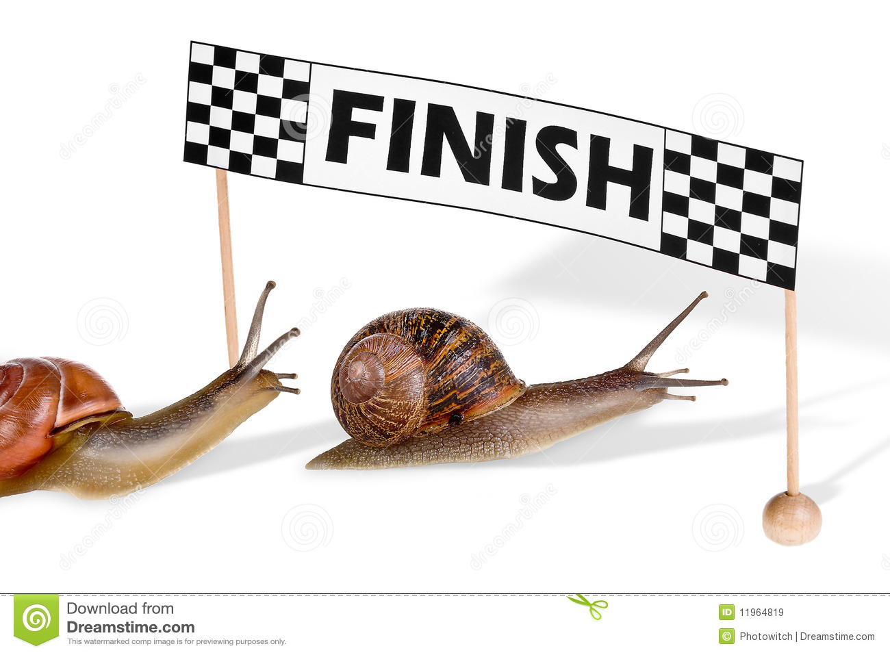 Race Track Wall Art >> Snail race clipart - Clipground