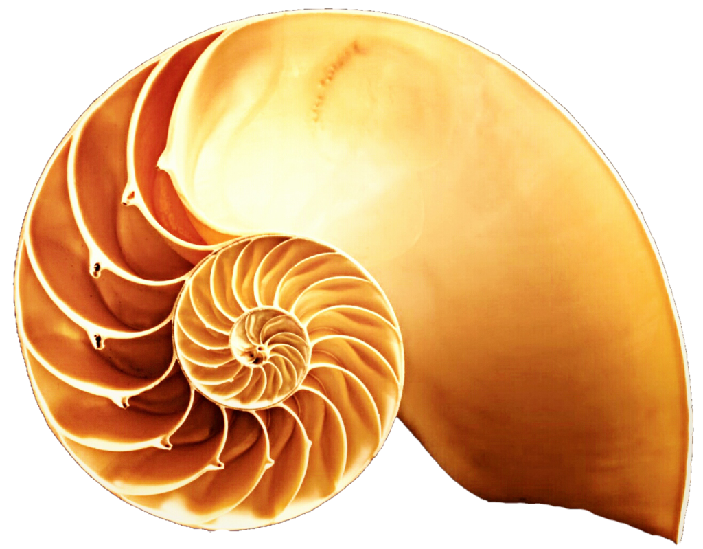Snail Shell Clipart Clipground