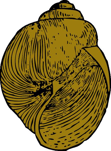 Snail Shell Clip Art at Clker.com.