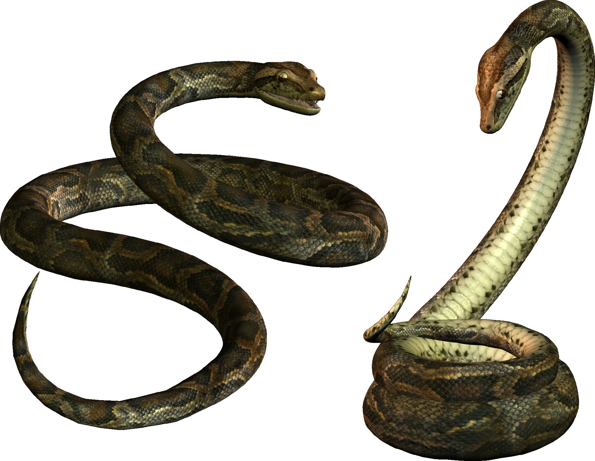 snake pictures free for desktop.