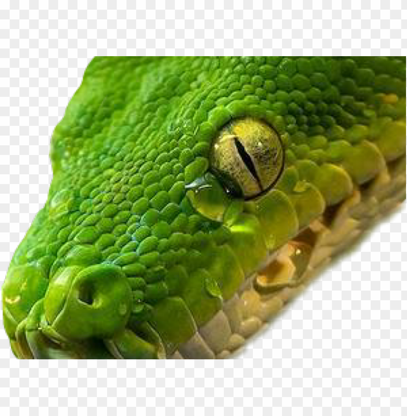 smooth green snake clipart lip.