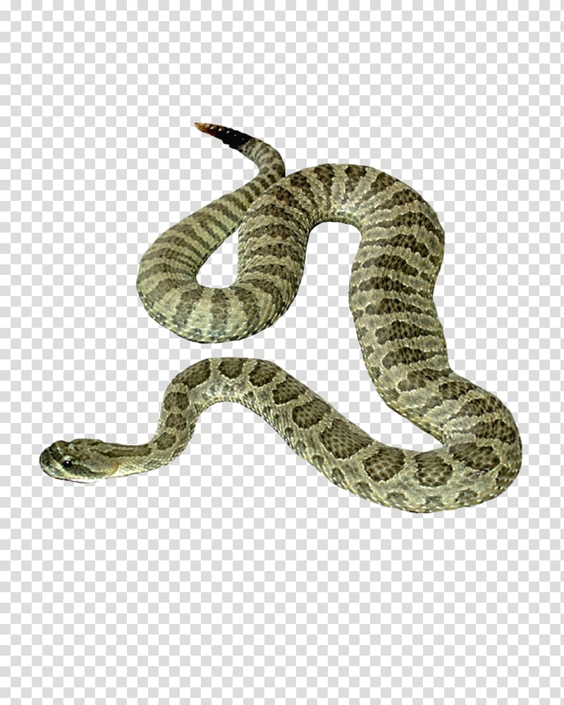 Snake Icon, Snake free transparent background PNG clipart.