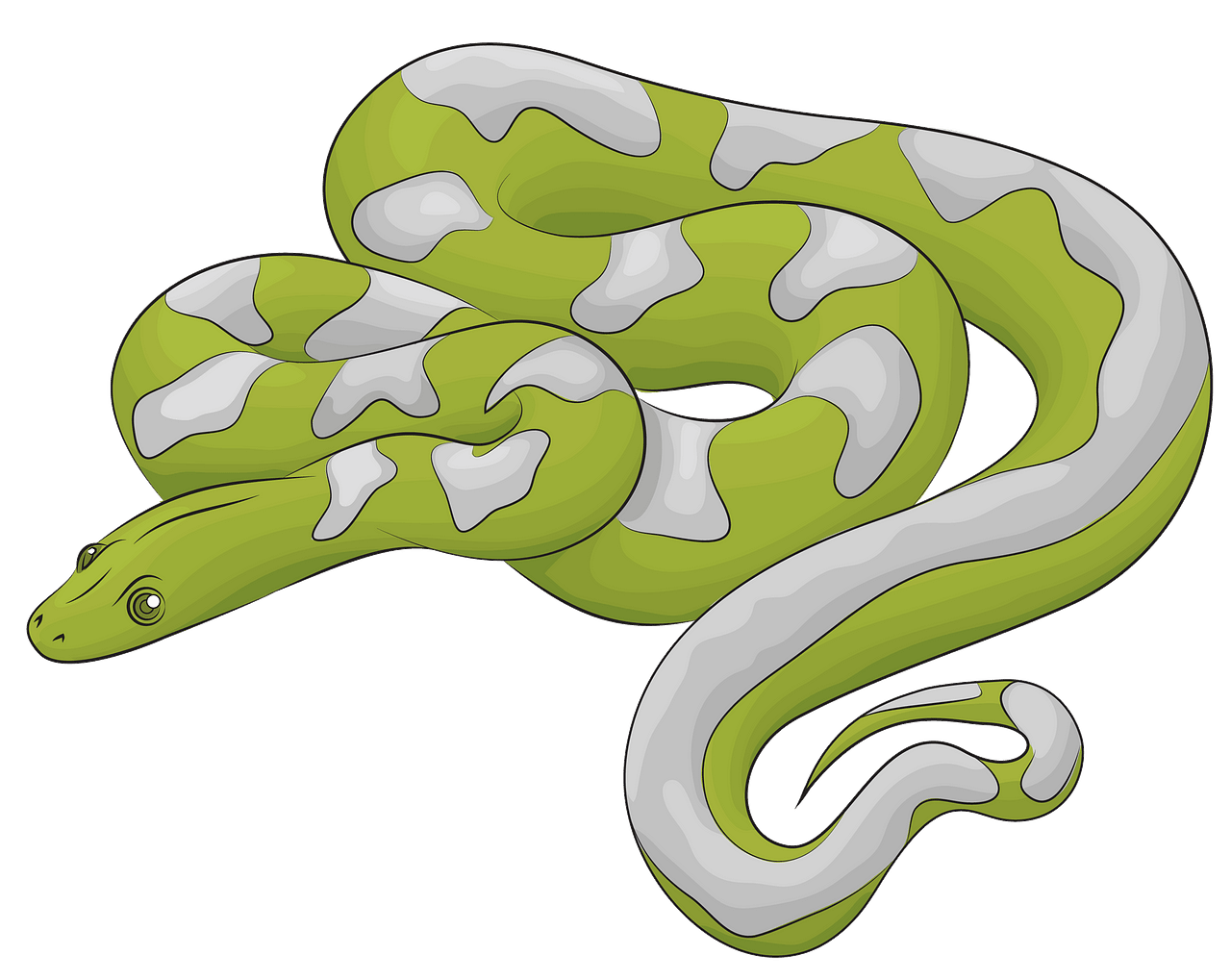 Boa Snake clipart. Free download..