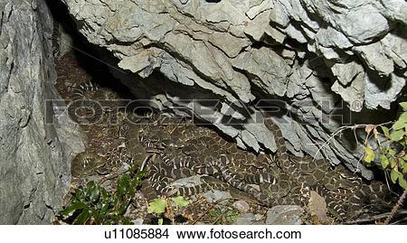 Snake Den Clipart.