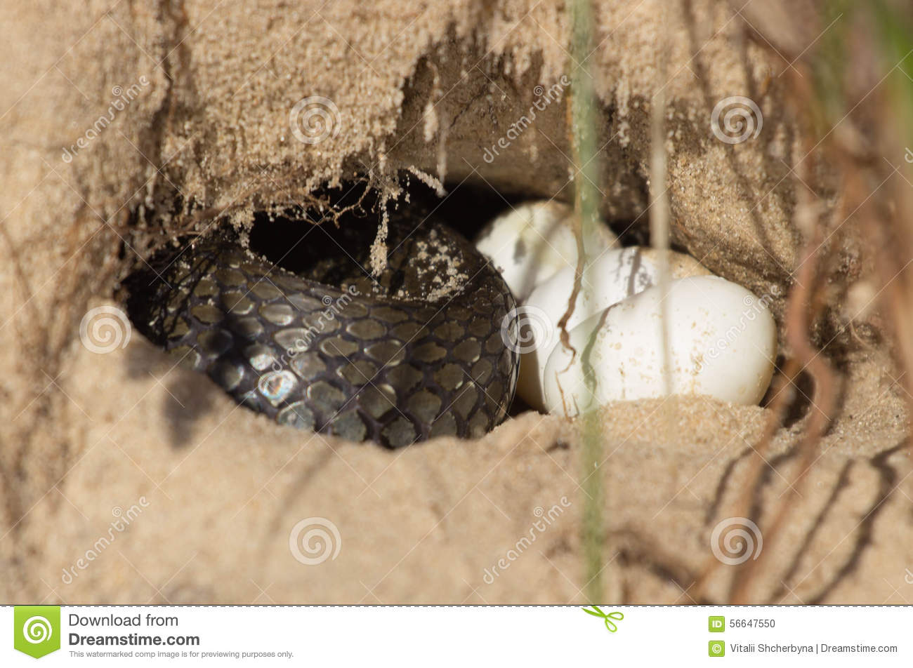 Snake In A Hole Stock Photo.