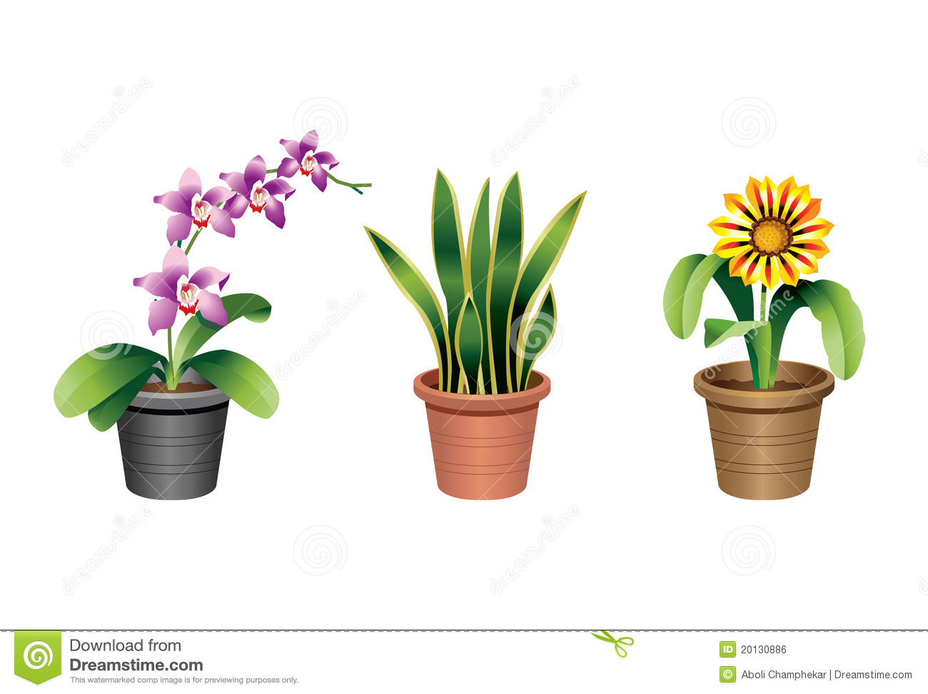 Vector Flat Illustration Of Indoor Homeplant Snake Plant In Pot.