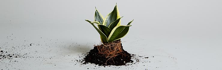 The Plant Hunter.
