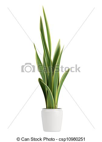 Stock Illustrations of Sansevieria growing in a pot.