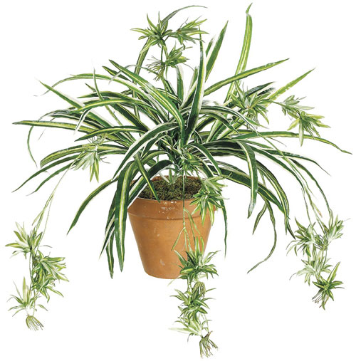 "Five ""Brown Thumb"" Approved House Plants."